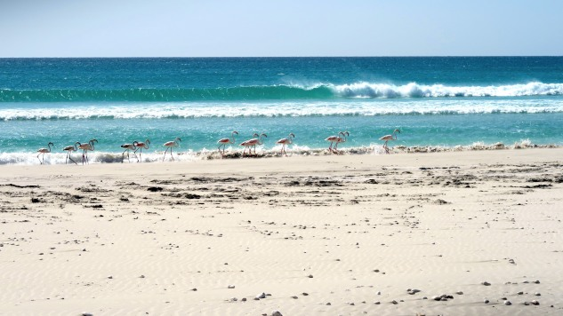 Flamingos_Beach